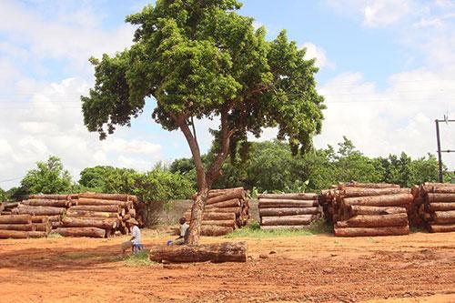 thép hay gỗ loại vật liệu nào thân thiện với môi trường hơn