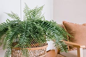 Những loại cây nên trồng trong nhà vừa giúp thanh lọc không khí vừa tốt cho phong thủy